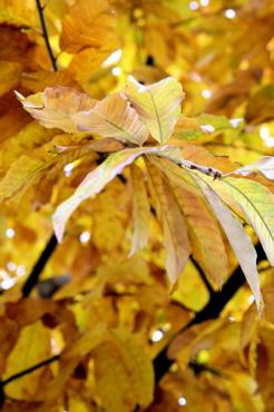 leaves7.jpg