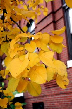 leaves9.jpg