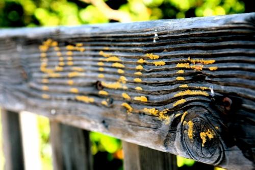 wood-peace.jpg