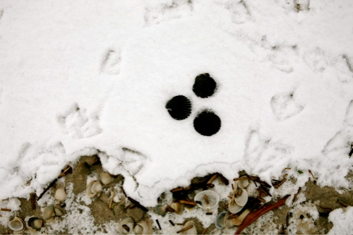snow-beach-19.jpg