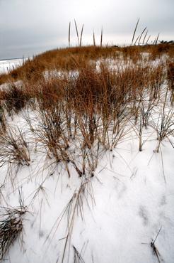 snow-beach-8.jpg