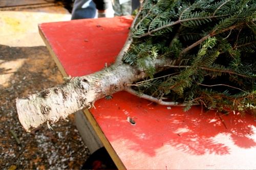 xmas-tree-06.jpg