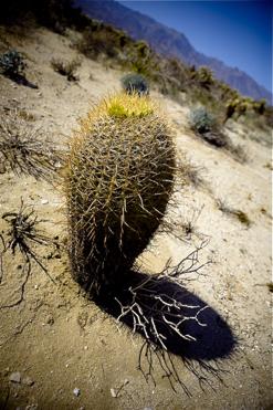 mojave-desert-1.jpg