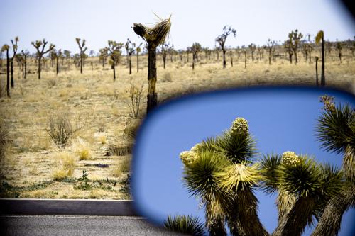 mojave-desert-13.jpg