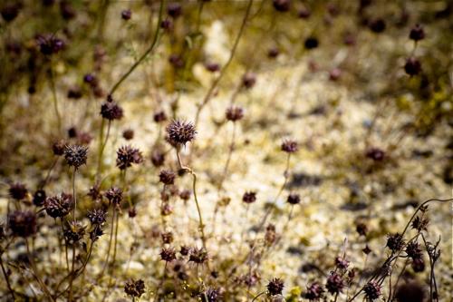 mojave-desert-14.jpg