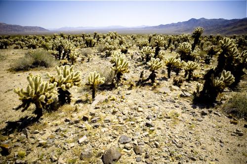 mojave-desert-17.jpg