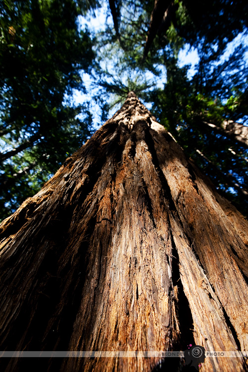 BLONDEPHOTO-REDWOOD-001-5340