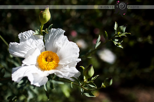 BLONDEPHOTO_090621_6000