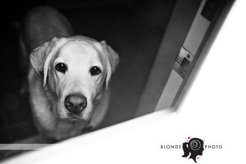 BLONDEPHOTO_090705_0180-2